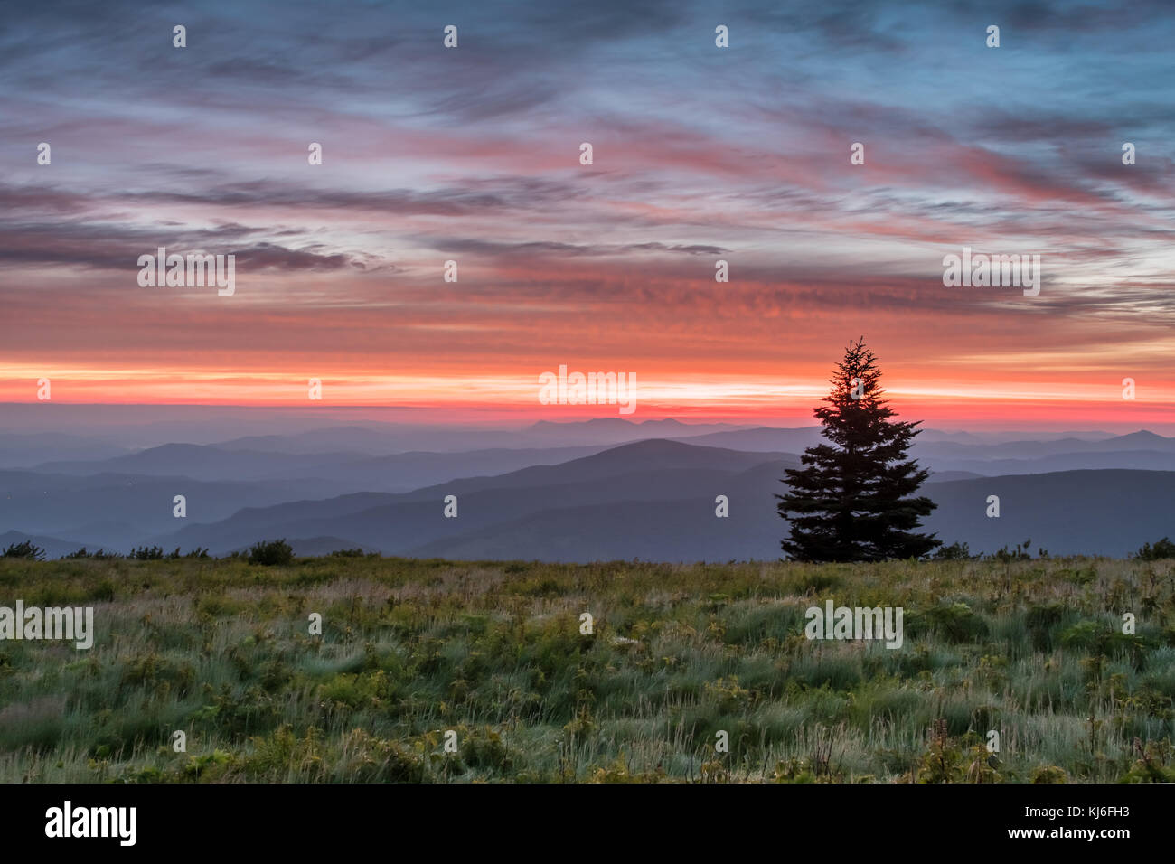 Single Pine Tree Stands Above Mountains at Sun Rise in North Carolina mountains - Stock Image