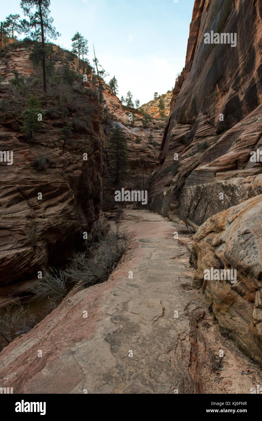 Smooth Rock Trail Through Canyon Walls in Zion - Stock Image
