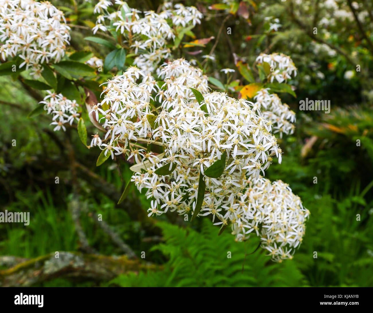 tresco-abbey-gardens-tresco-isles-of-sci