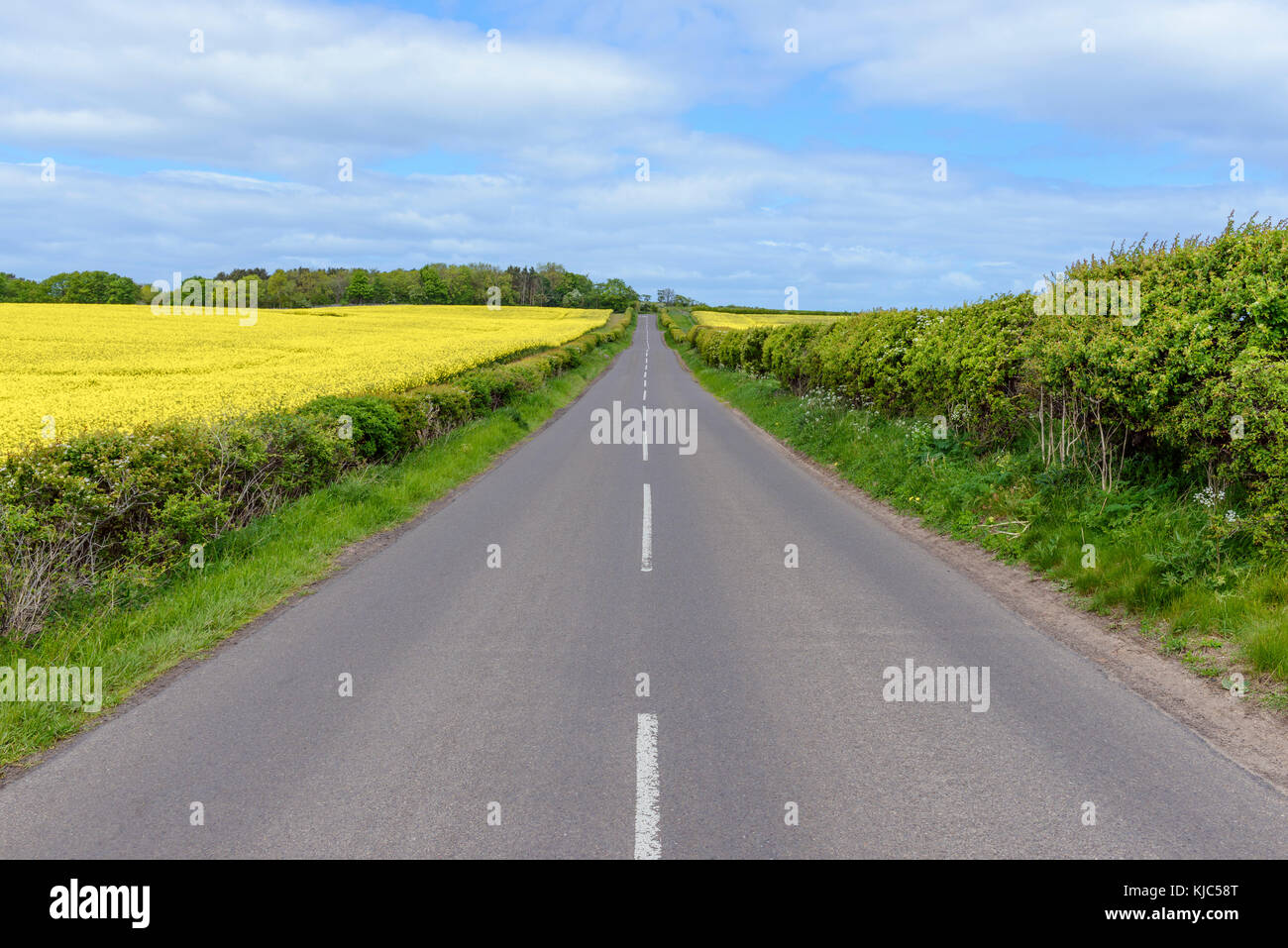 Country road and farmland in spring at North Berwick in Scotland - Stock Image