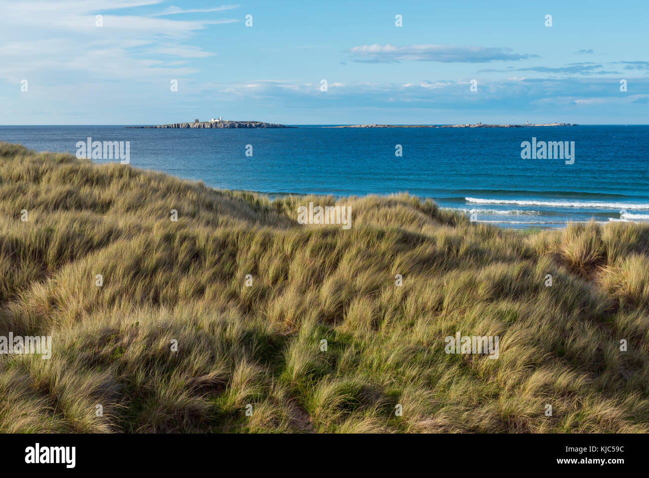 Grassy sand dunes along shoreline at Seahouses, Inner Farne Island and Lighthouse on the North Sea in Northumberland, - Stock Image