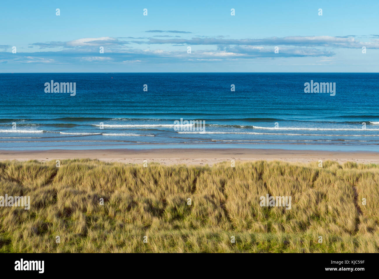 Grassy sand dunes and beach along the shores of Seahouses on the North Sea in Northumberland, England, United Kingdom - Stock Image