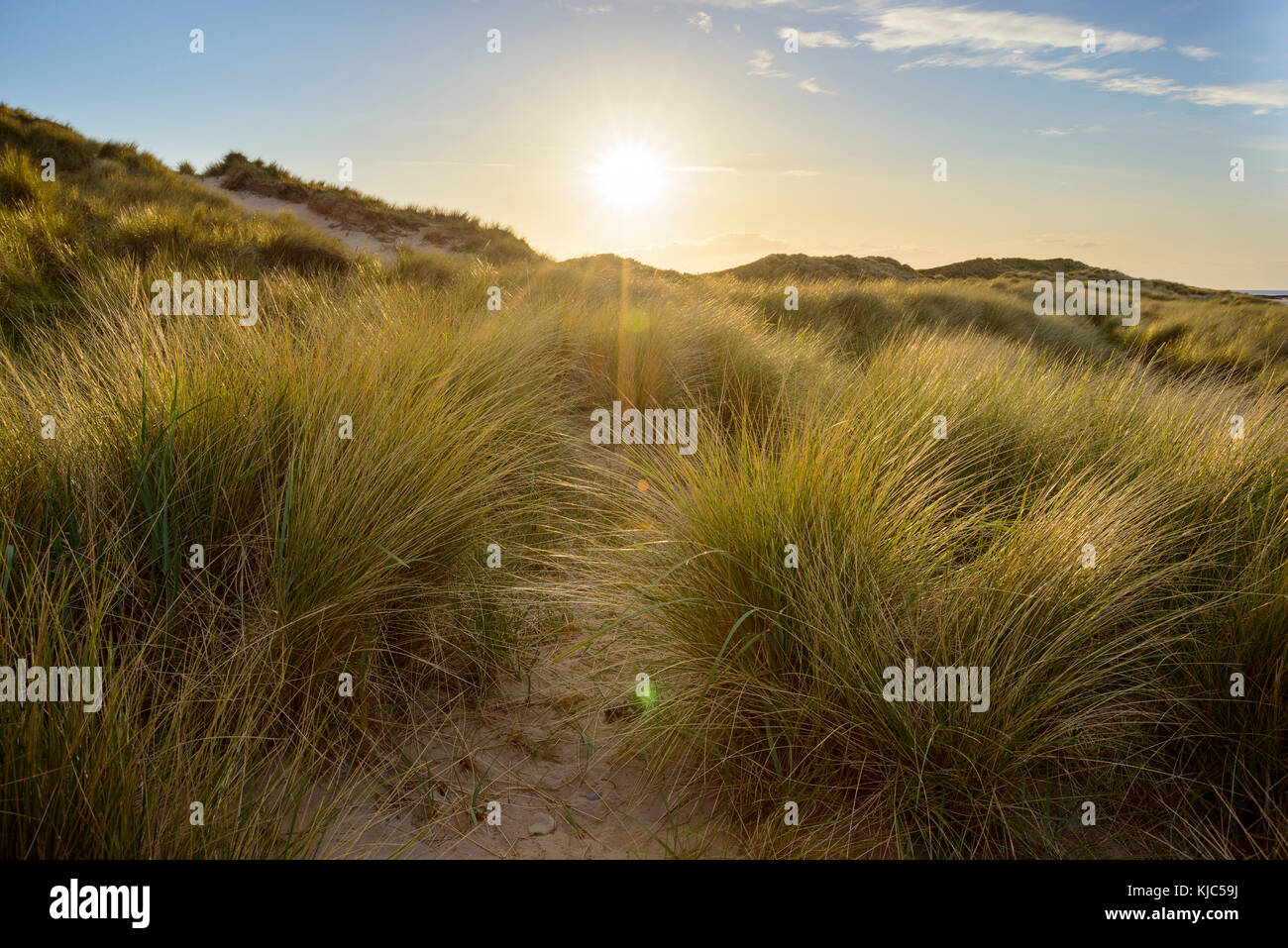 Sun shining over the grassy sand dunes in the village of Seahouses at the North Sea in Northumberland, England, - Stock Image