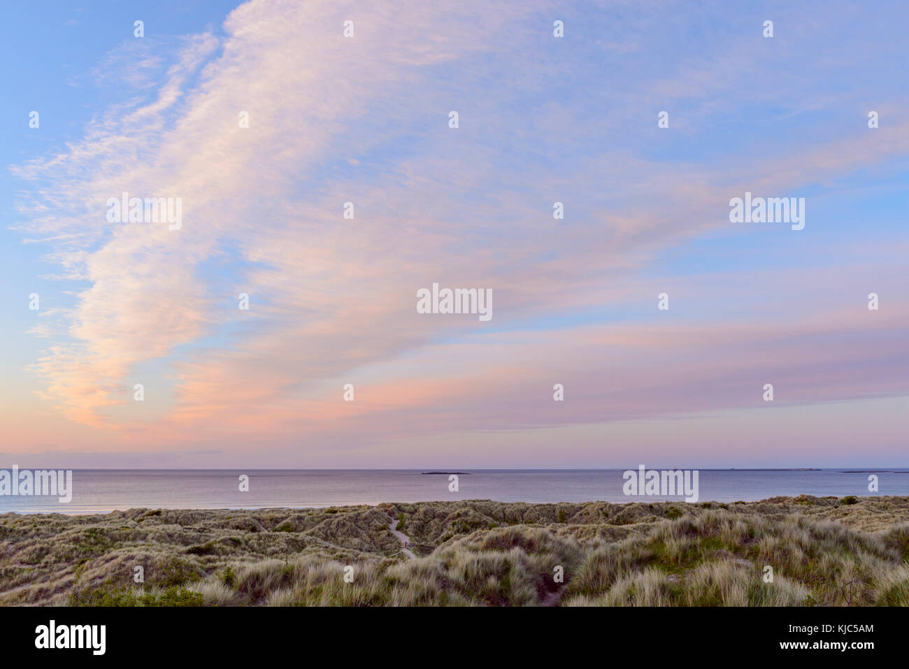 Pastel clouds over the North Sea at sunrise with dune grass on the beach at Bamburgh in Northumberland, England, - Stock Image