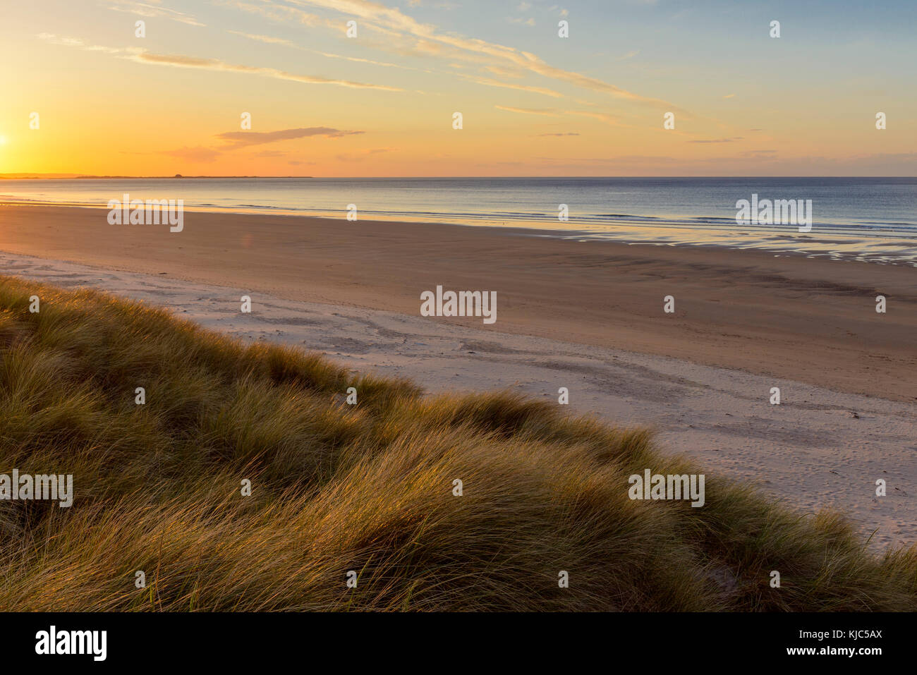 Sun reflecting on dune grass on the beach at sunrise at Bamburght over the North Sea in Northumberland, England, - Stock Image