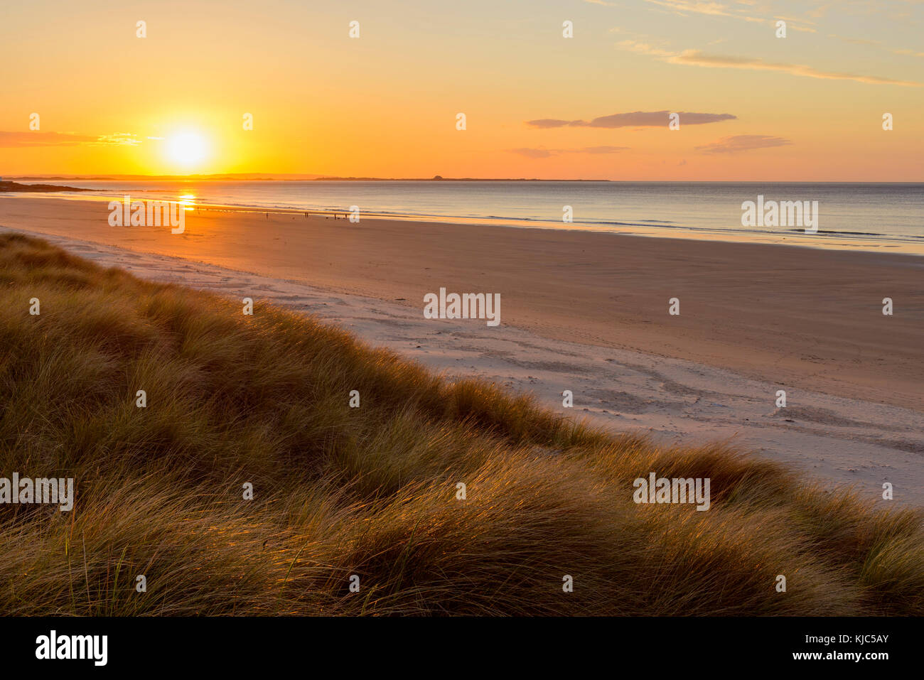Sun reflecting on the dune grass and beach at sunrise over the North Sea, Bamburgh in Northumberland, England, United - Stock Image