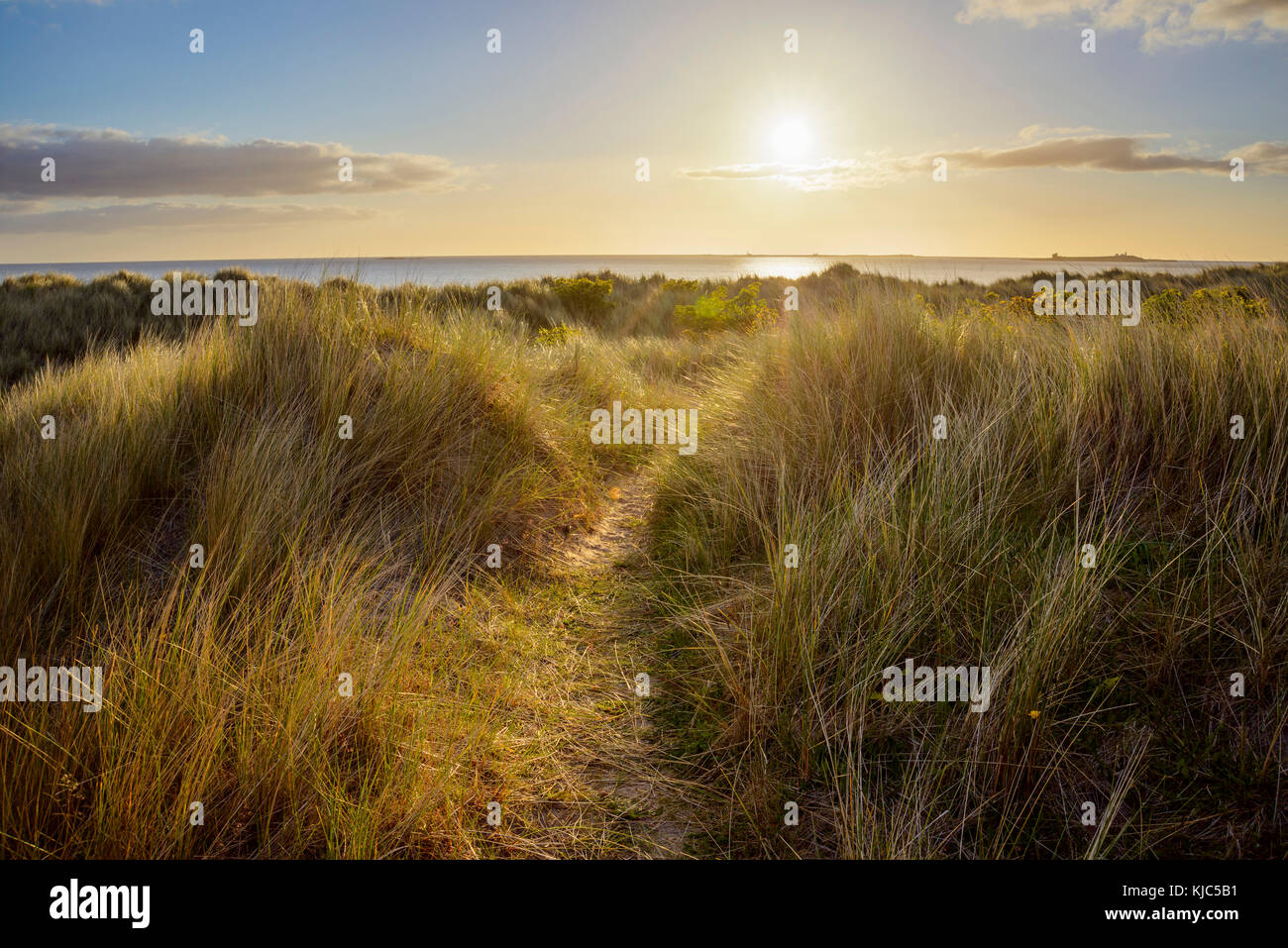 Path through sand dunes to the North Sea at sunrise at Bamburgh in Northumberland, England, United Kingdom - Stock Image