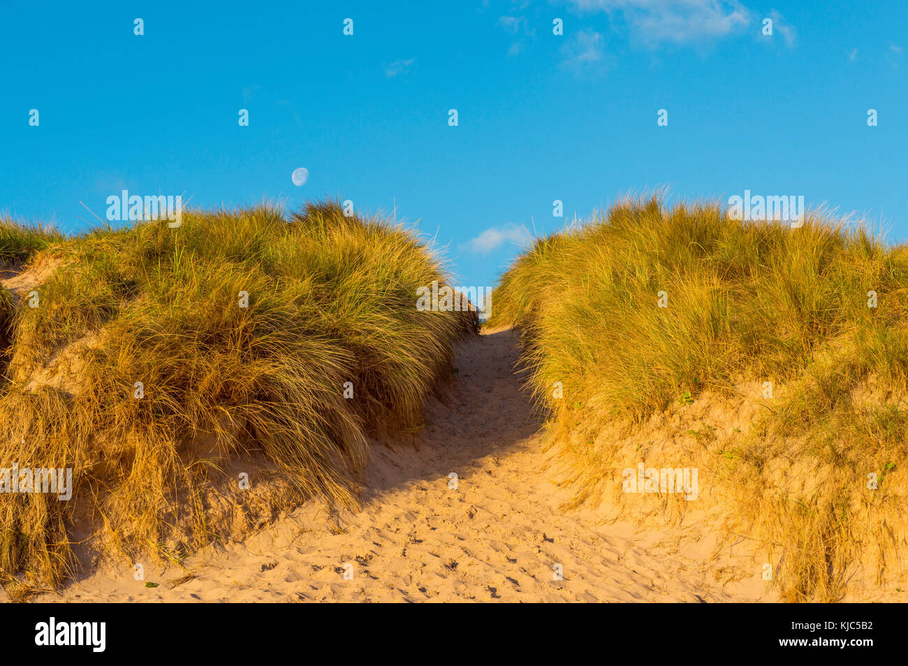 Path through sand dunes and moon in the bright morning sky at the North Sea, Bamburgh in Northumberland, England, - Stock Image
