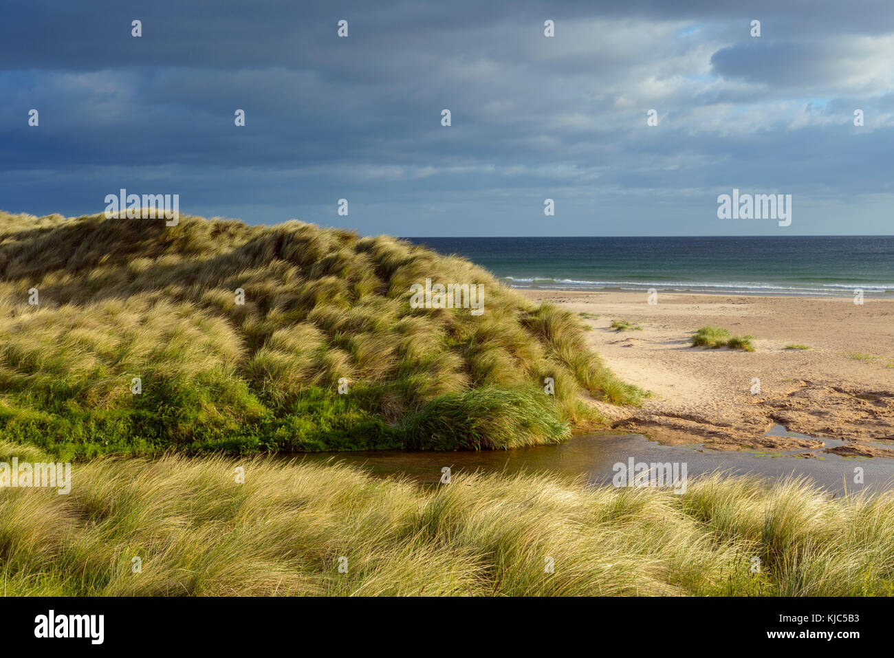 Wind blowing the dune grass with a small river on the beach at Bamburgh, North Sea in Northumberland, England, United - Stock Image
