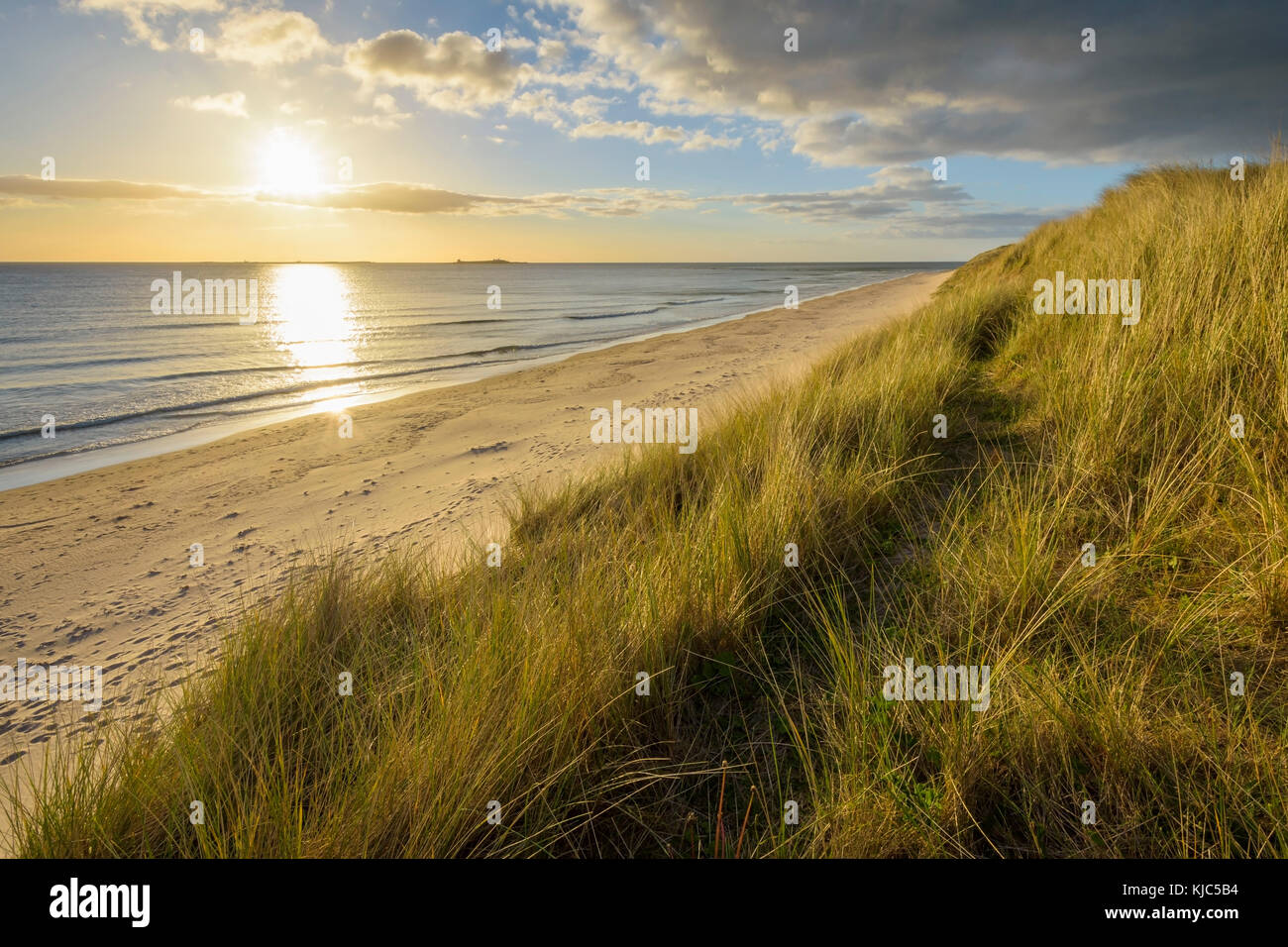 Dune grass and beach at sunrise along the North Sea at Bamburgh in Northumberland, England, United Kingdom - Stock Image