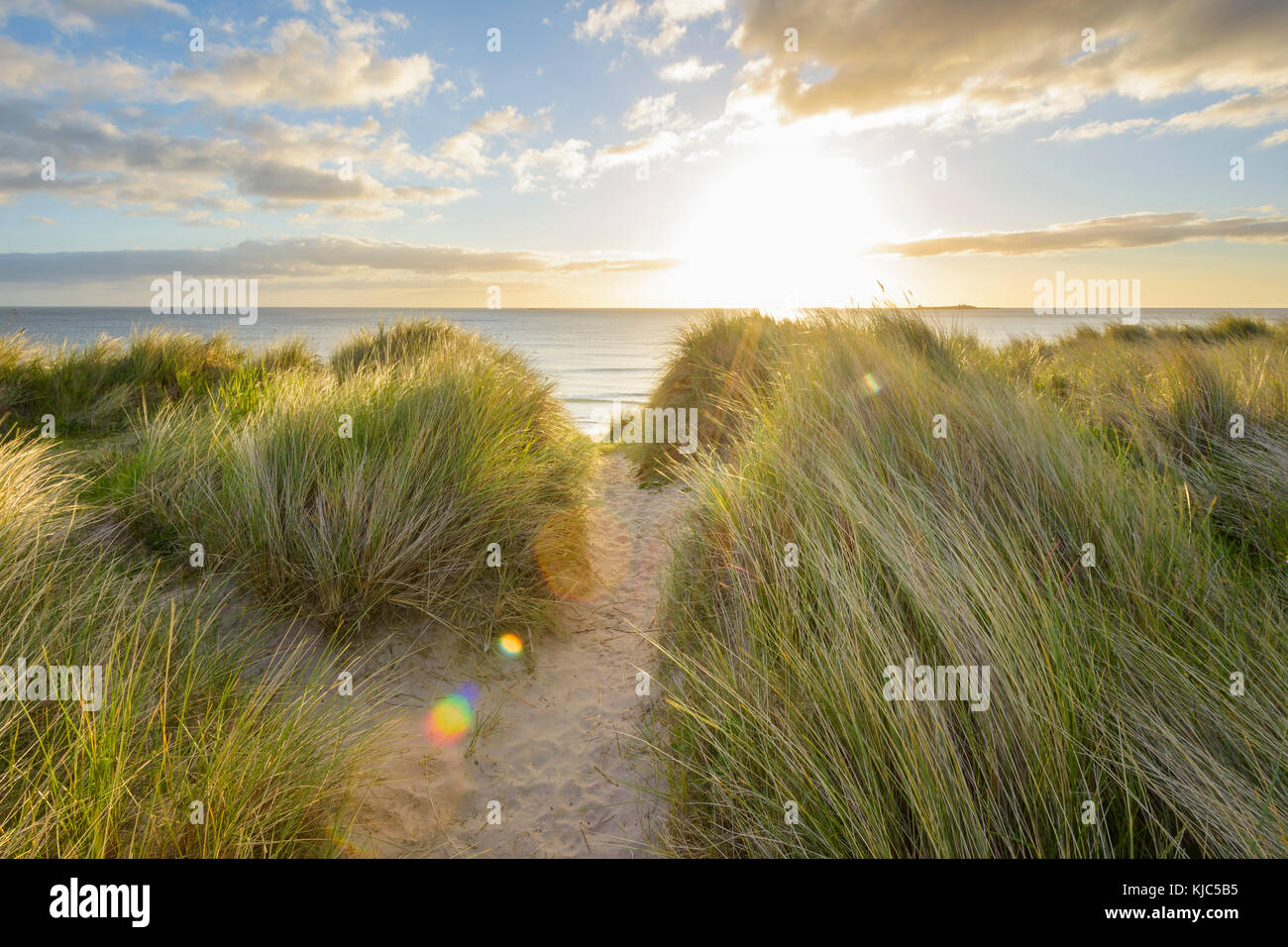 Path through dune grass on the beach with the sun shining over the North Sea at dawn, Bamburgh in Northumberland, - Stock Image