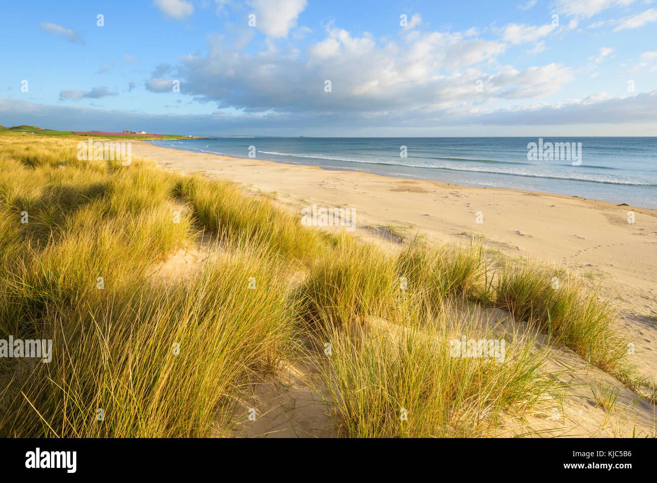 Sand dunes with dune grass on the beach at Bamburgh along the North Sea in Northumberland, England, United Kingdom - Stock Image