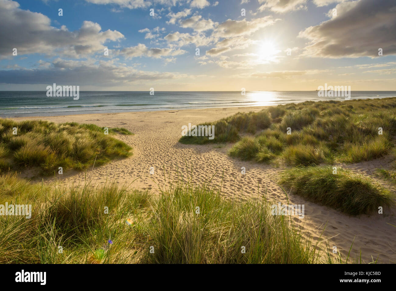 Grassy sand dunes on beach with sun shining over the North Sea at sunrise, Bamburgh in Northumberland, England, - Stock Image