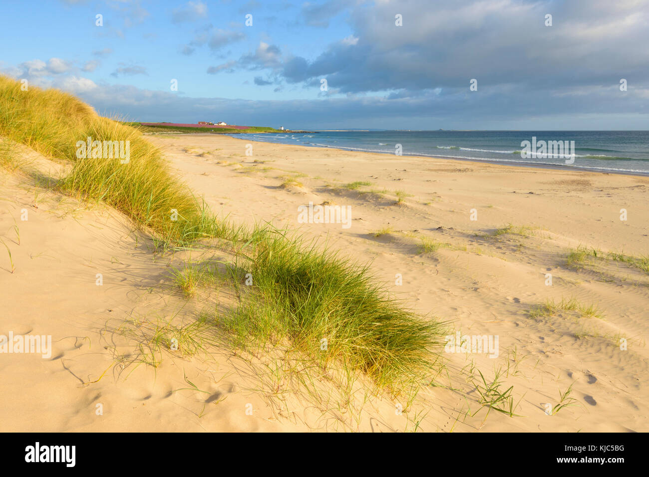 Sand dunes on the beach at Bamburgh with the North Sea in the background in Northumberland, England, United Kingdom - Stock Image