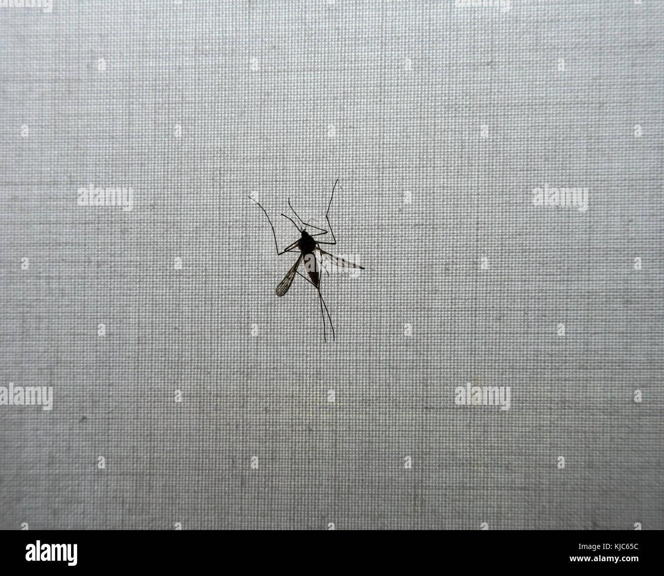 fly-trapped-on-roller-blind-KJC65C.jpg