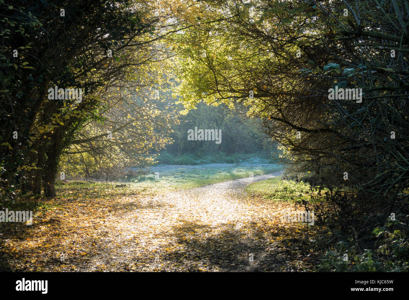early-morning-mist-through-tree-arch-cam