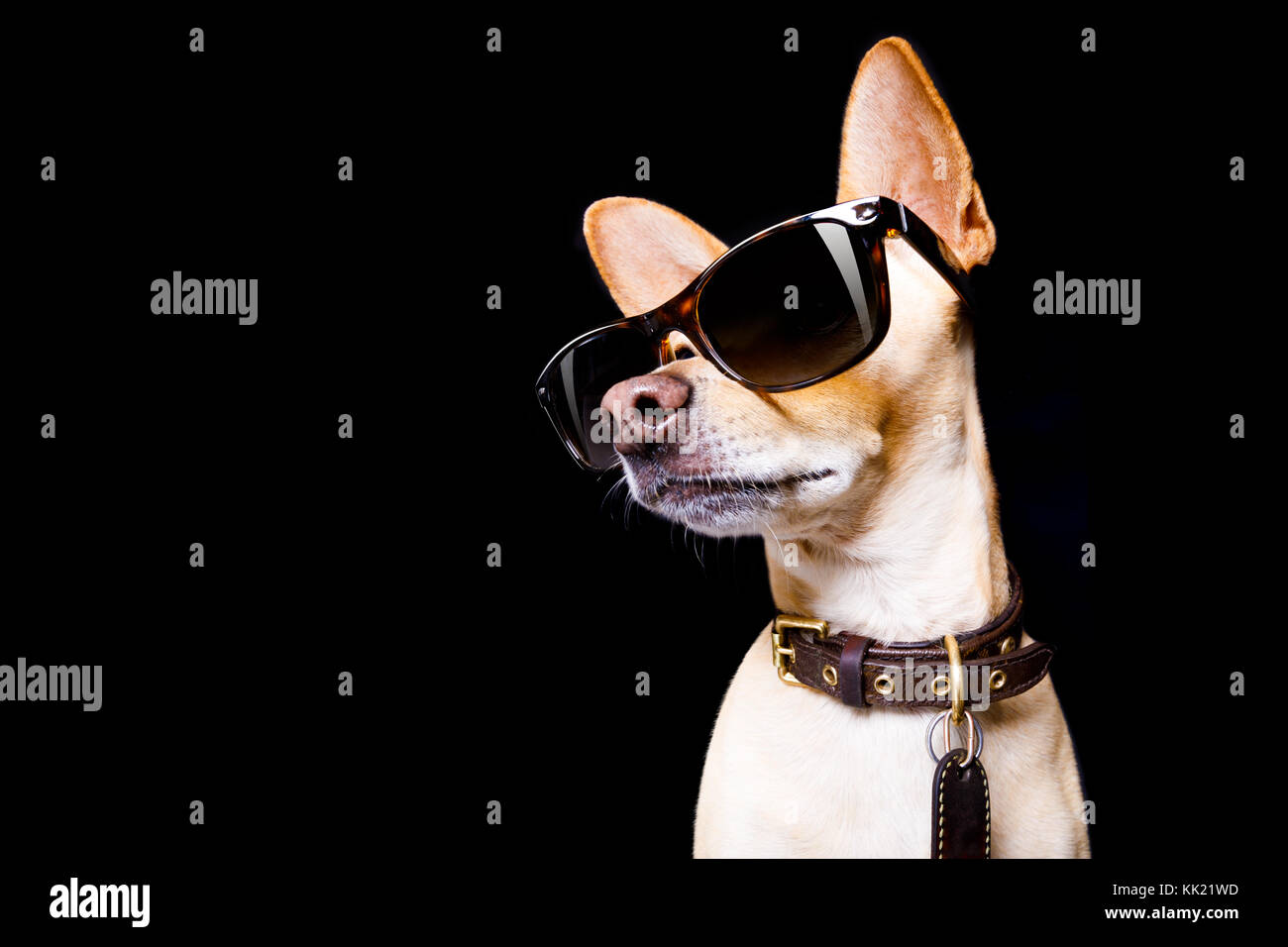 Amazoncom  Cydnlive Cool Stylish and Funny Cute Pet