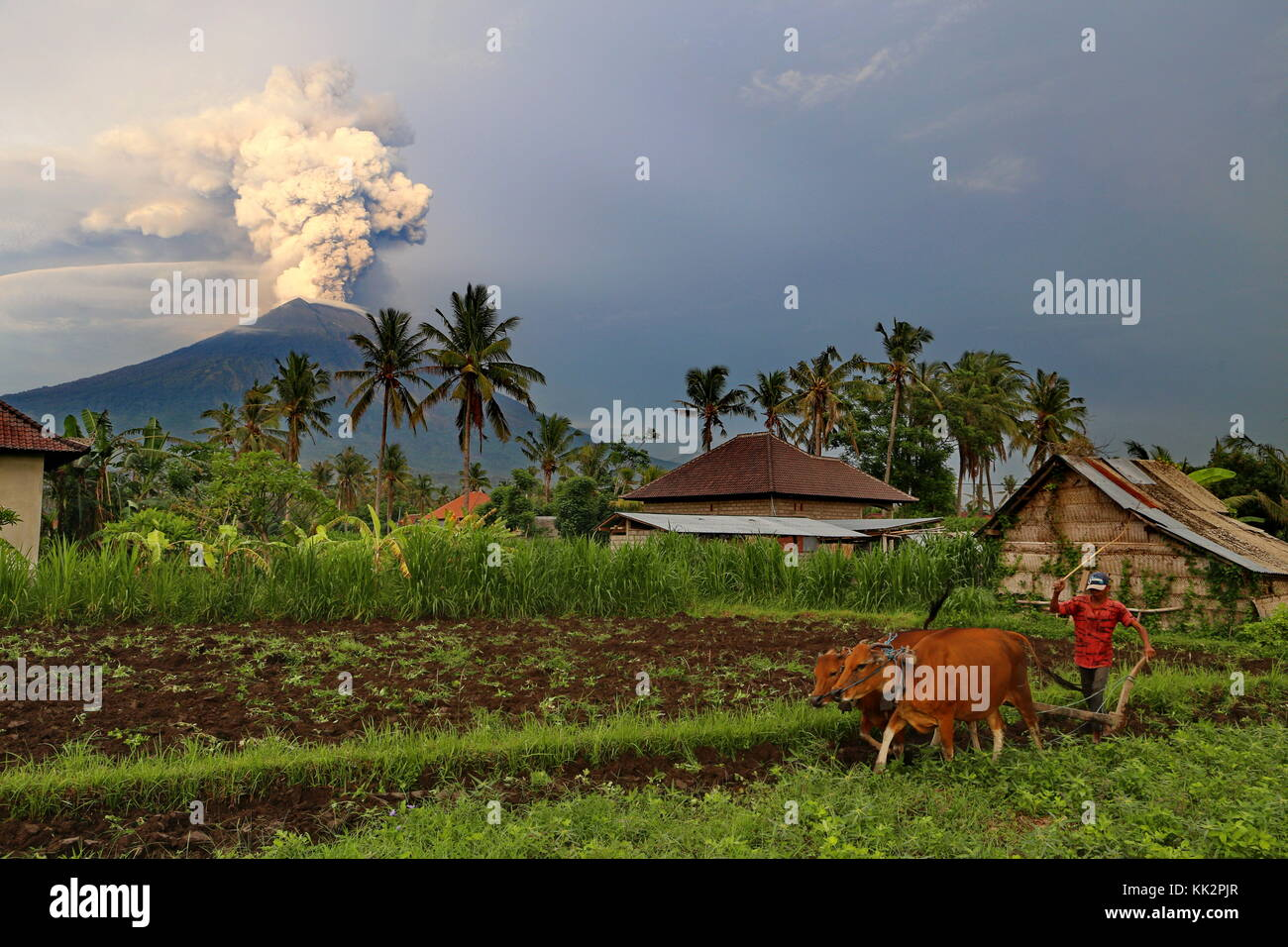Bali, Indonesia. 28th Nov, 2017. The eruption of Mt. Agung disrupts flights to/from Bali, endangers local population. - Stock Image