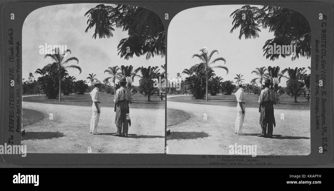 Two men standing in Hope Gardens, a fine example of a tropical park, Jamaica, 1904. From the New York Public Library. - Stock Image