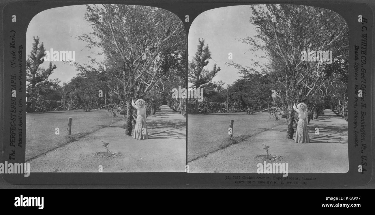 Orchid Avenue, Hope Gardens, Jamaica, 1904. From the New York Public Library. - Stock Image