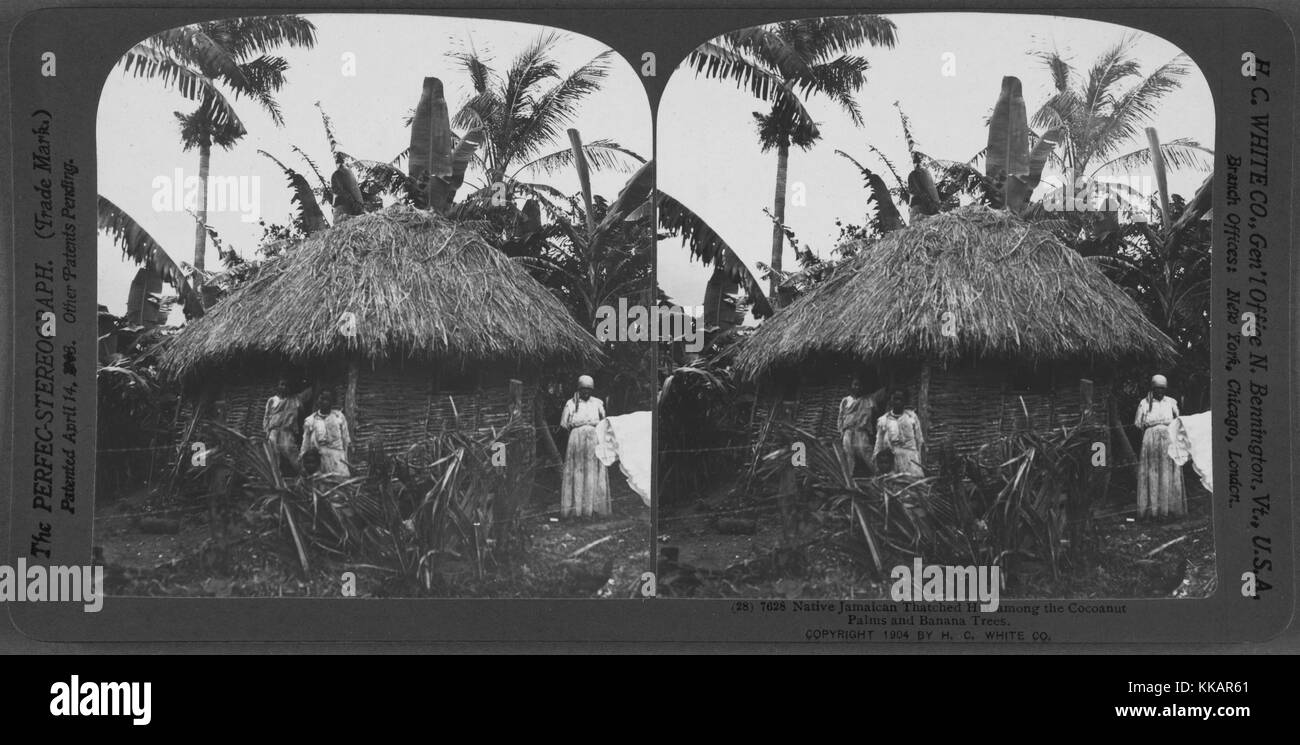 Native Jamaican thatched hut among the Cocoanut Palms and Banana Trees, Jamaica, 1904. From the New York Public - Stock Image