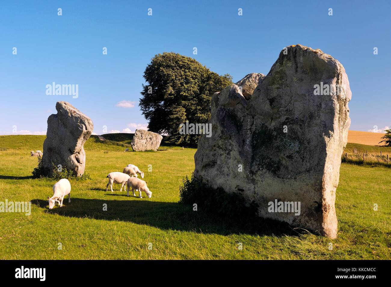 Avebury Neolithic henge and stone circles, Wiltshire, England. 5600 years old. Megaliths in the SE quadrant - Stock Image