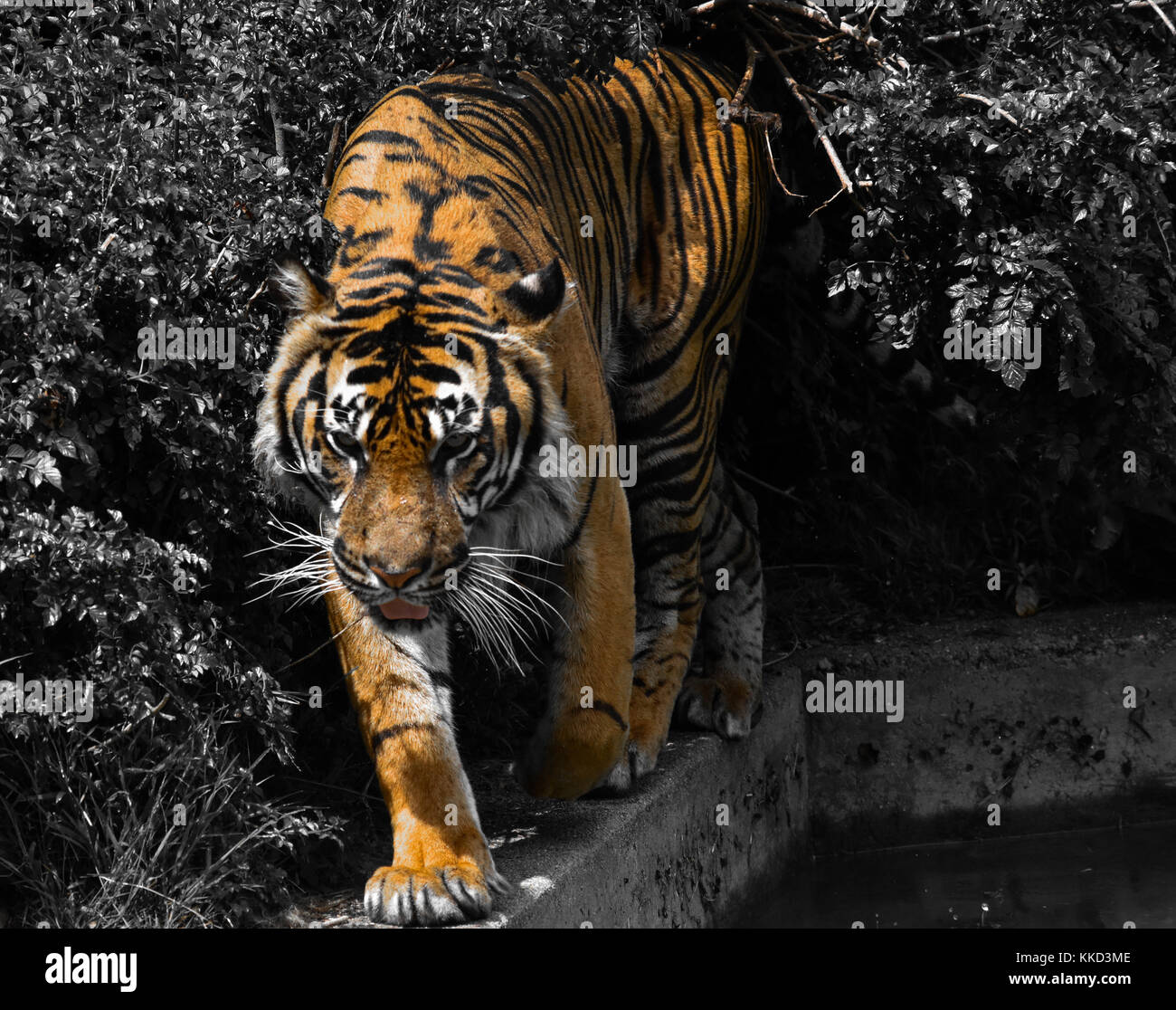 Black, White, and Orange - Stock Image