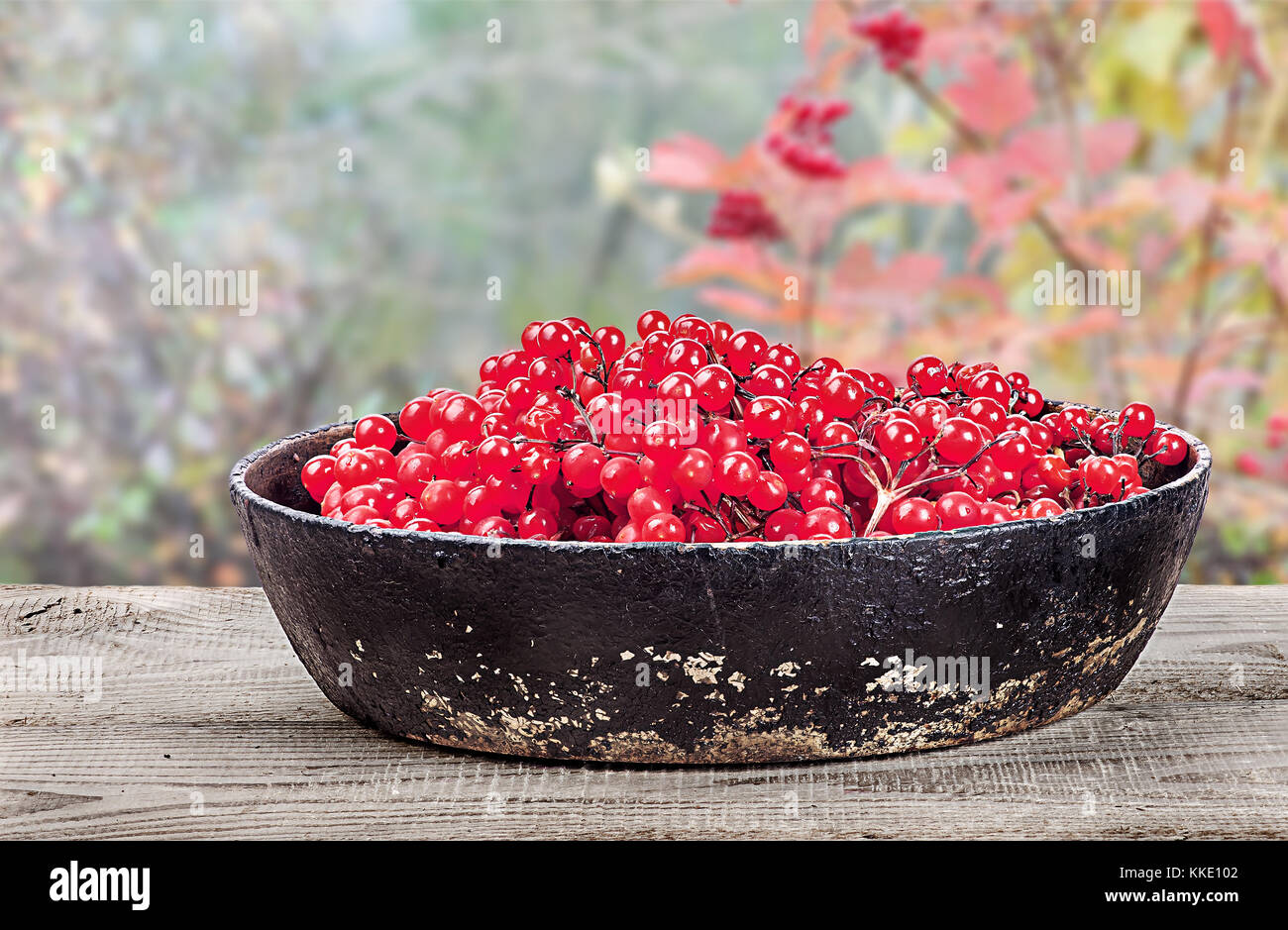 Viburnum in a pan on wooden table - Stock Image