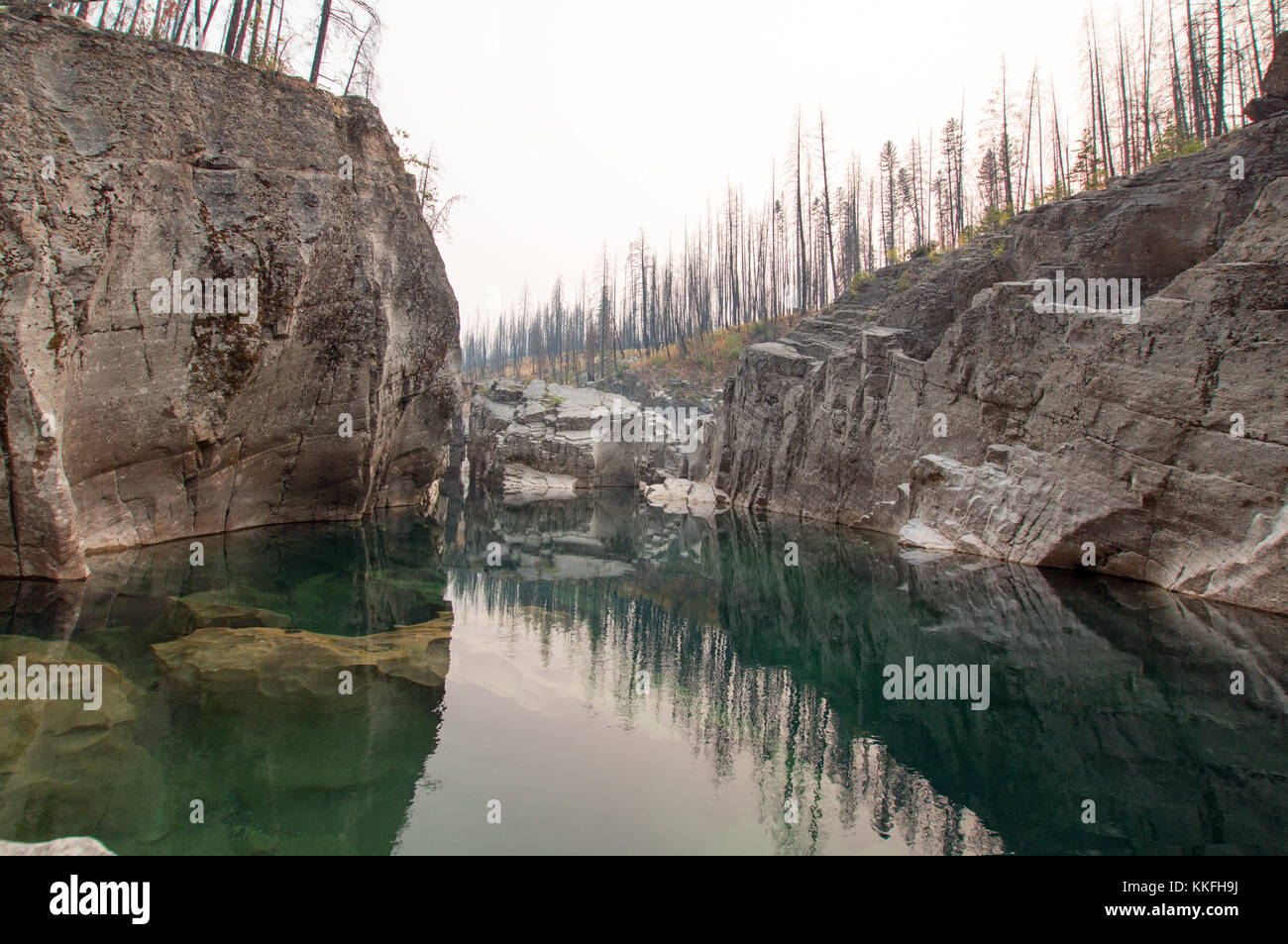 a still forest pool pdf