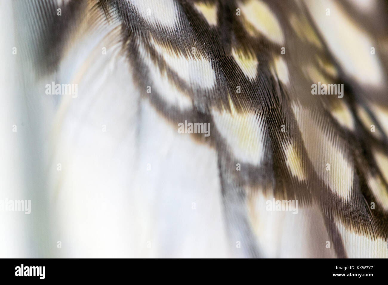 Plumage Abstract Bird Wing Stock Photos & Plumage Abstract ...