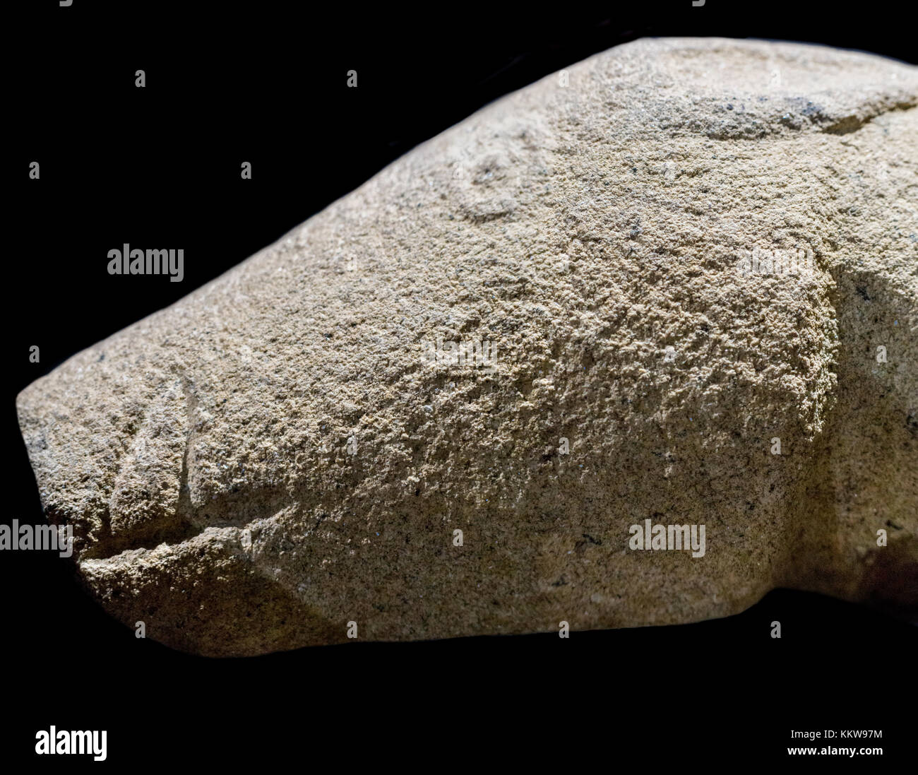 Madrigalejo Verraco head. Megalithic sculpture of boar made by Vettones on 4th century BC, Madrigalejo, Caceres, - Stock Image