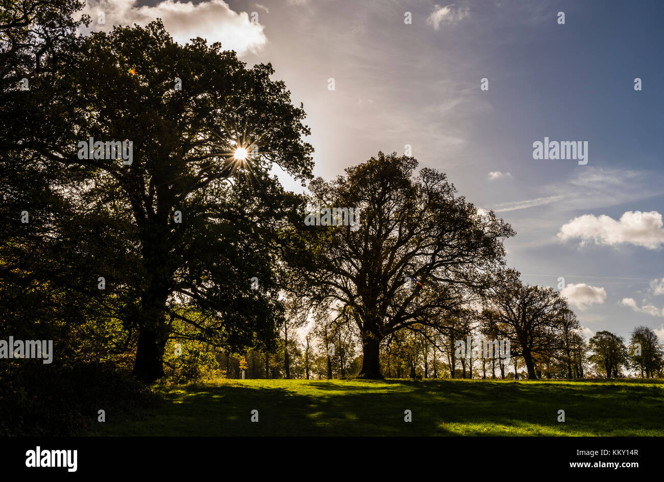 Rising sun behind trees at Trent Park in north London, UK - Stock Image