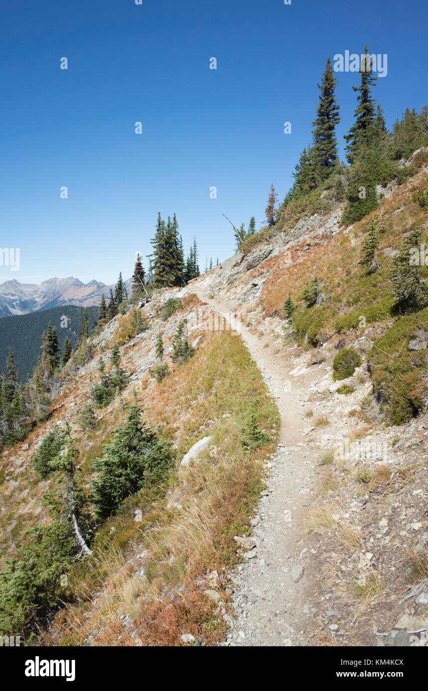 Pacific Crest Trail through alpine meadow, near Harts Pass, Pasayten Wilderness, Washington. - Stock Image