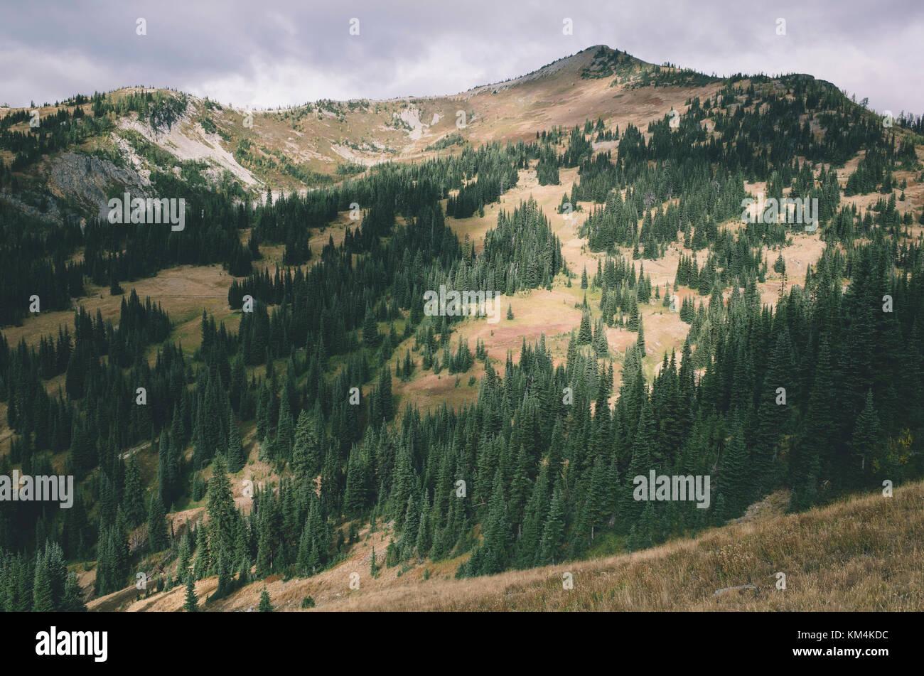 Fall in the North Cascades, near Harts Pass, Pasayten Wilderness, Washington. - Stock Image