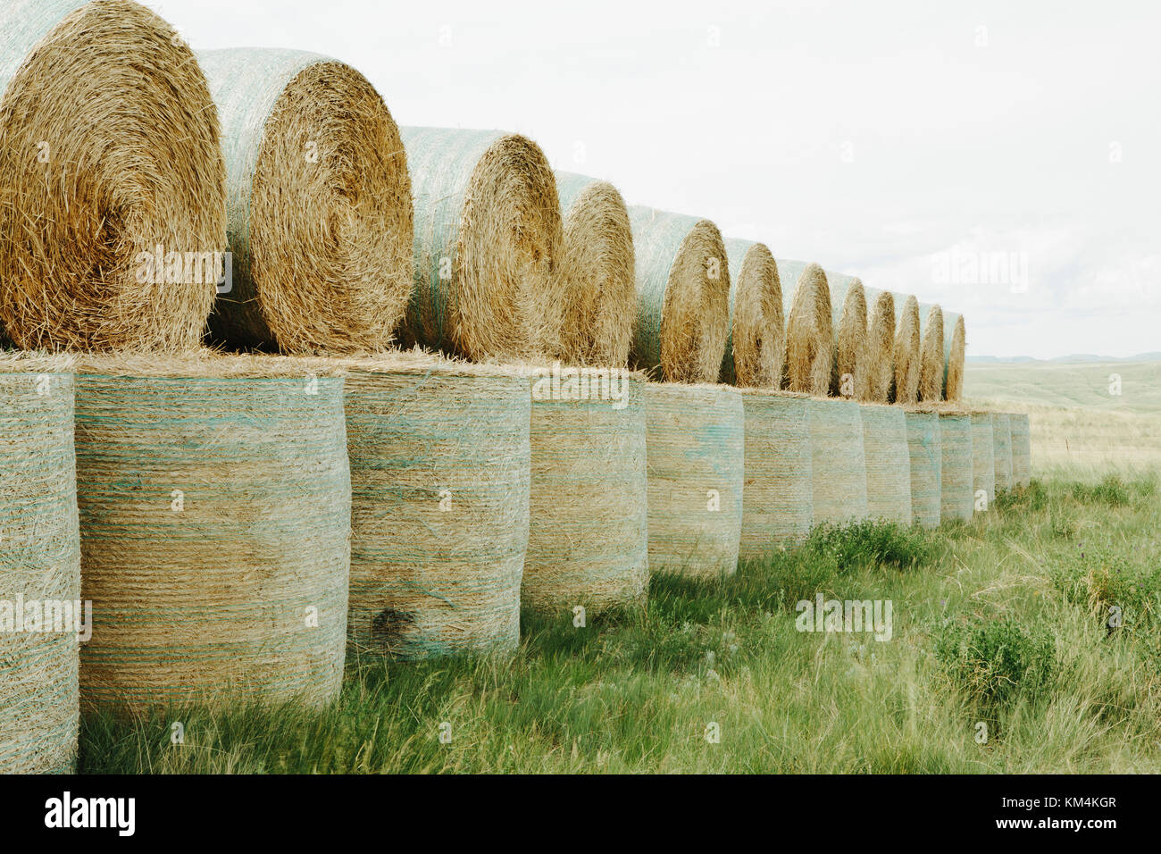 Wrapped round stacked hay bales on the prairie at harvest time in Montana. - Stock Image