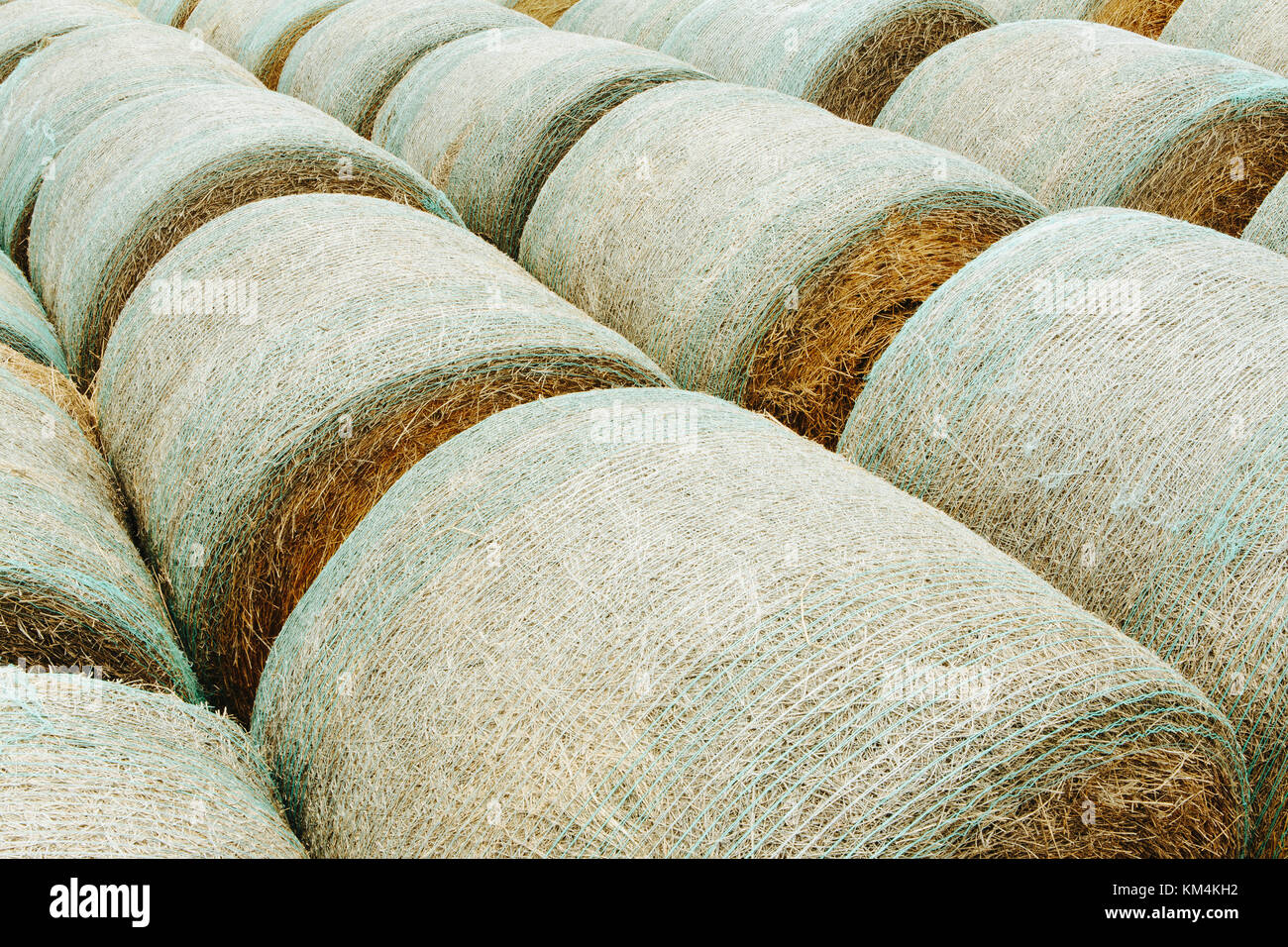 Wrapped round hay bales in neat rows on the prairie in Montana. - Stock Image