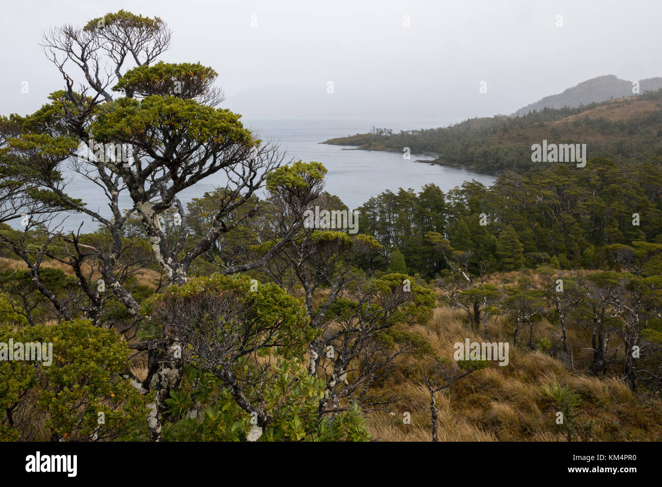 Vegetation at Carlos III Island, in the Straits of Magellan - Stock Image