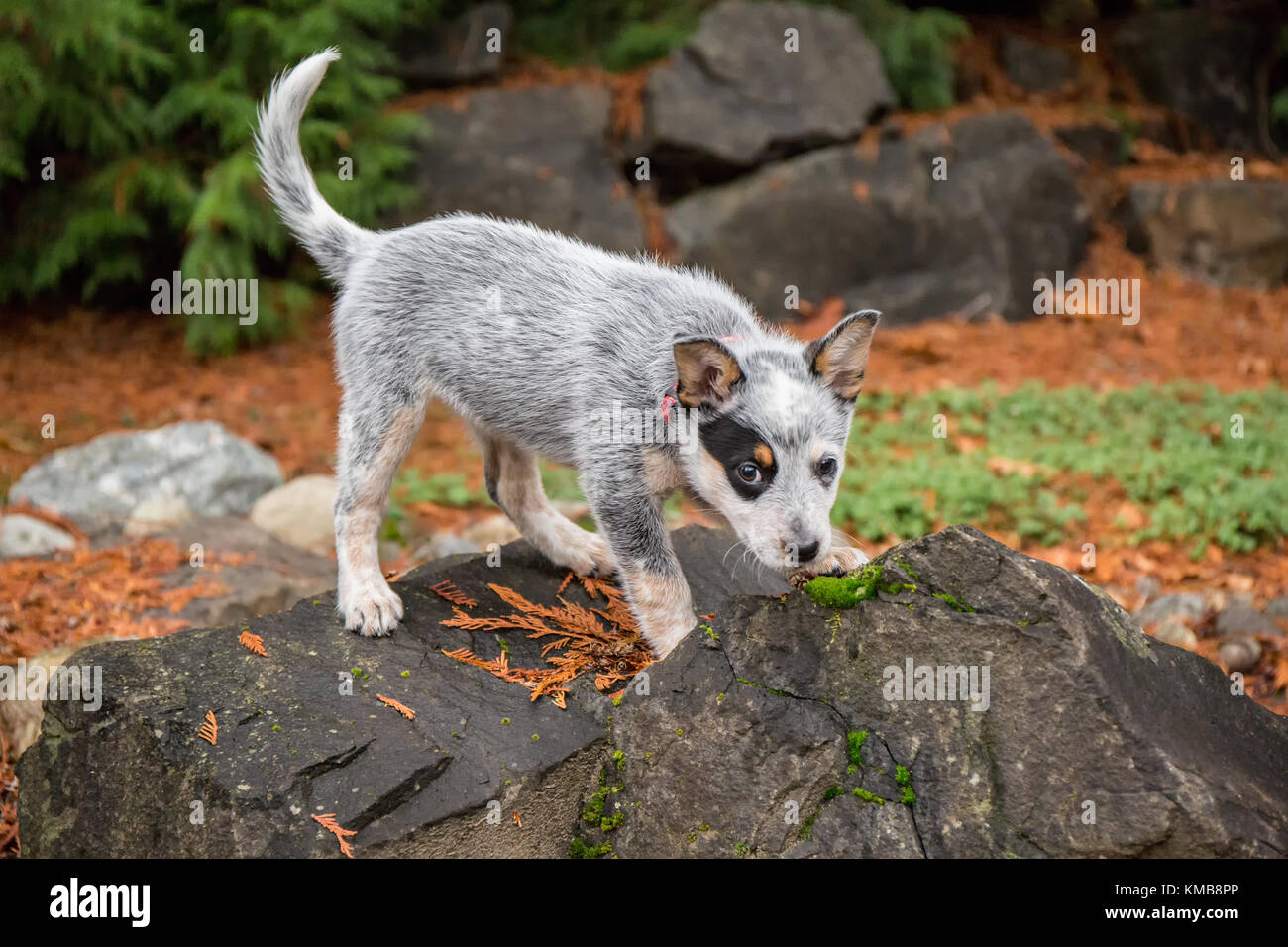 Small Dog Sniffing Tree