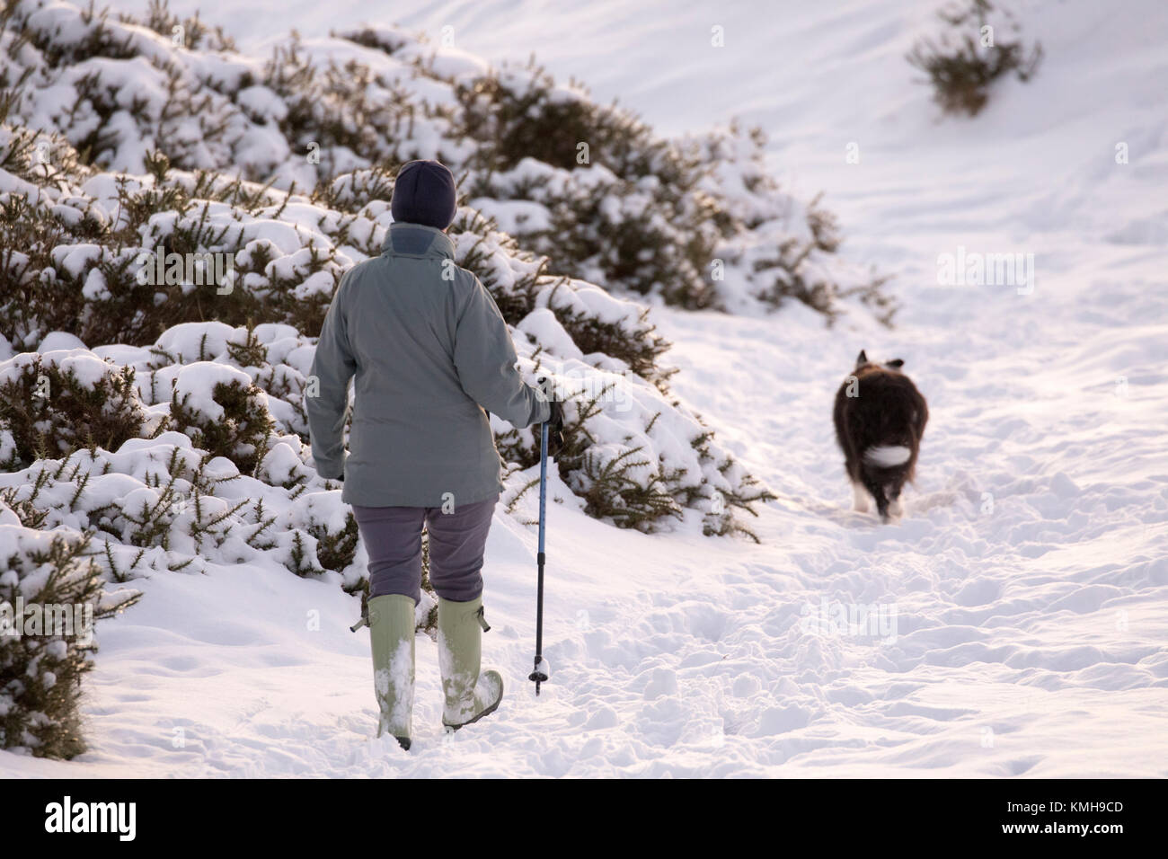 Dog Walks Buckden