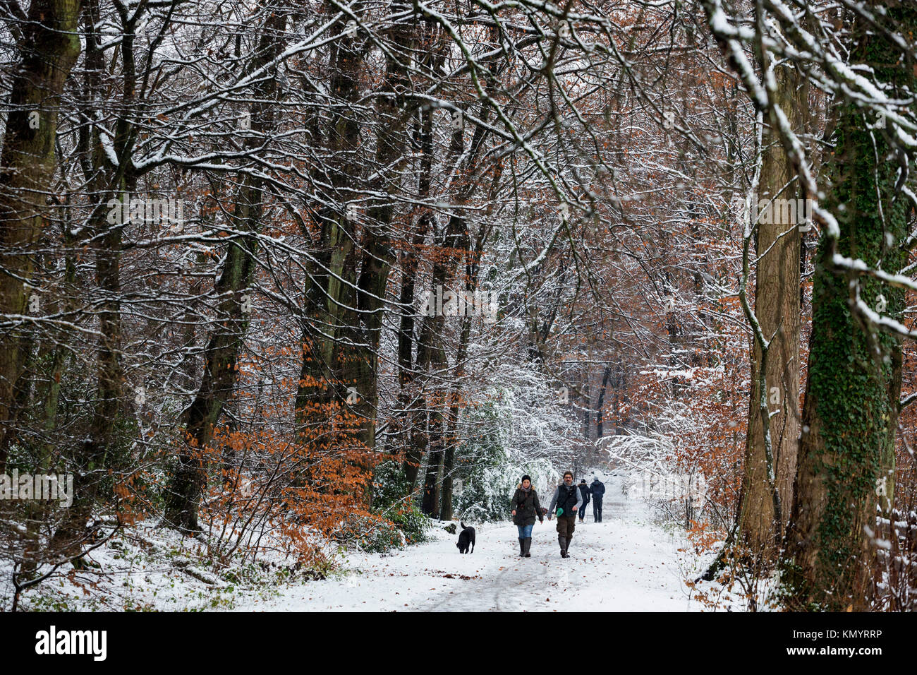 wintry-landscape-with-snow-and-trees-for