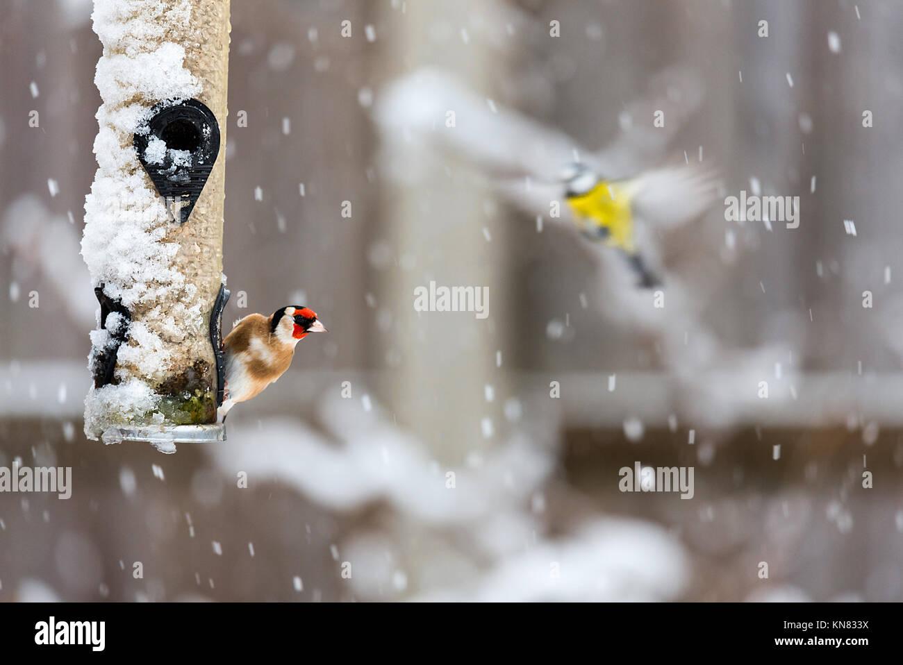 warwickshire-uk-10th-dec-2017-winter-sno