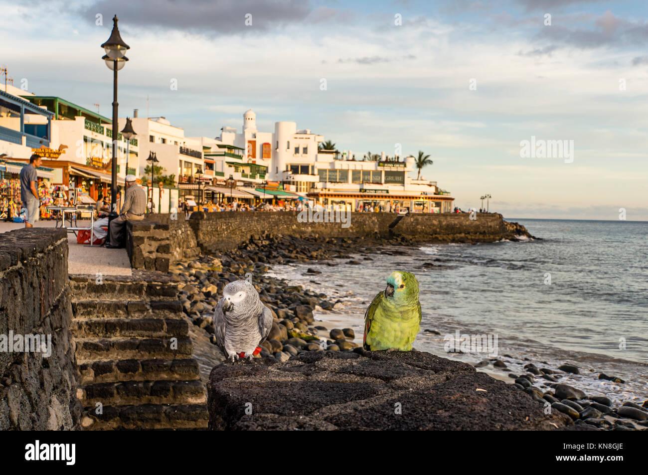Playa Blanca, Promenade, parrots, Lanzarote, Canary Islands, Spain - Stock Image