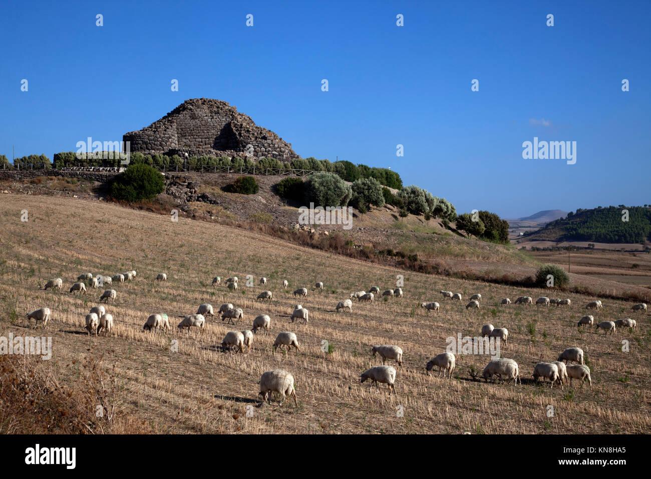 Ancient megalithic Serra Orrios Nuragic Village in Sardinia, Italy - Stock Image
