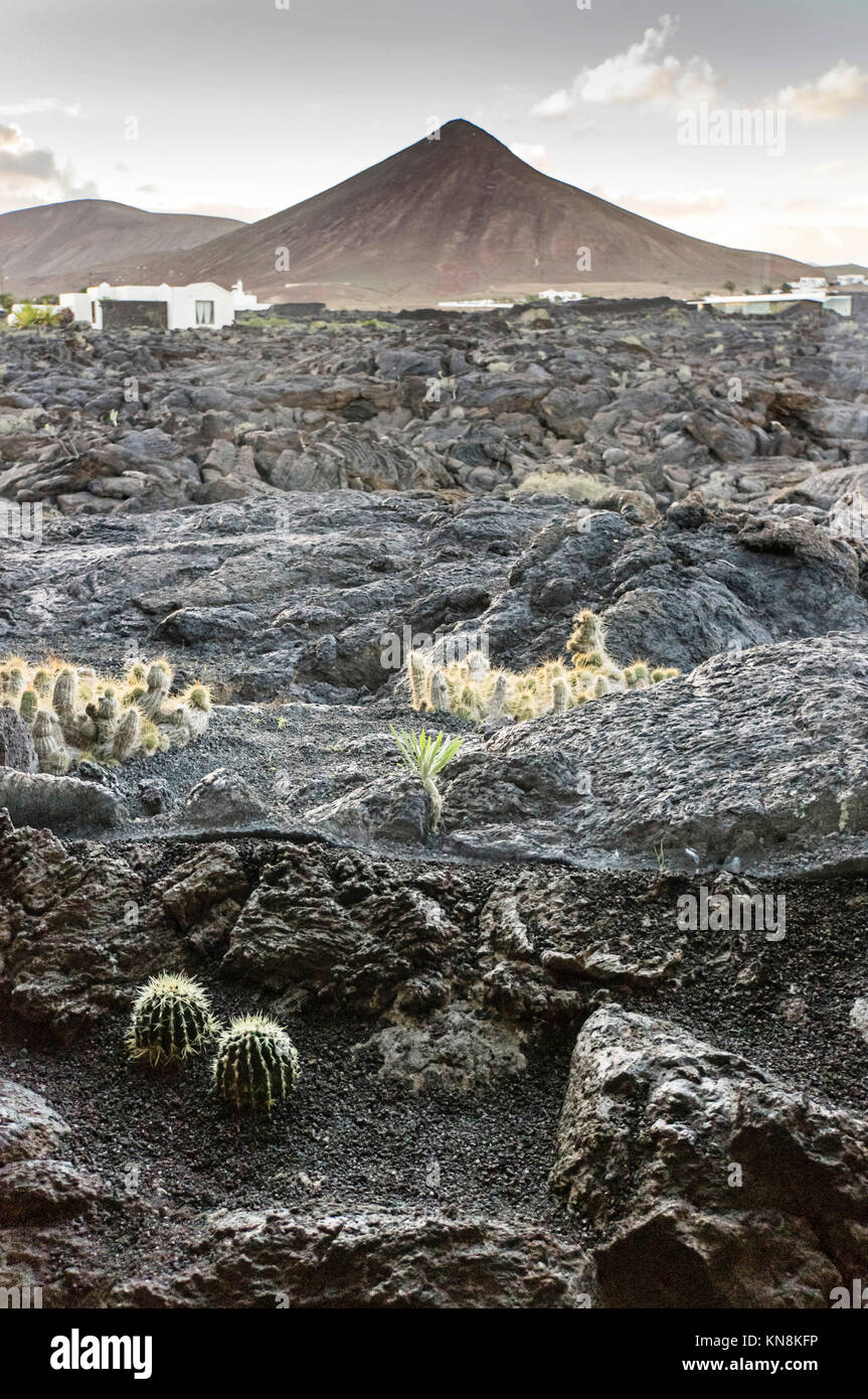 View from Casa Cesar Manrique museum of the Manrique foundation to lava fields , Lanzarote, Canary Islands, Spain - Stock Image