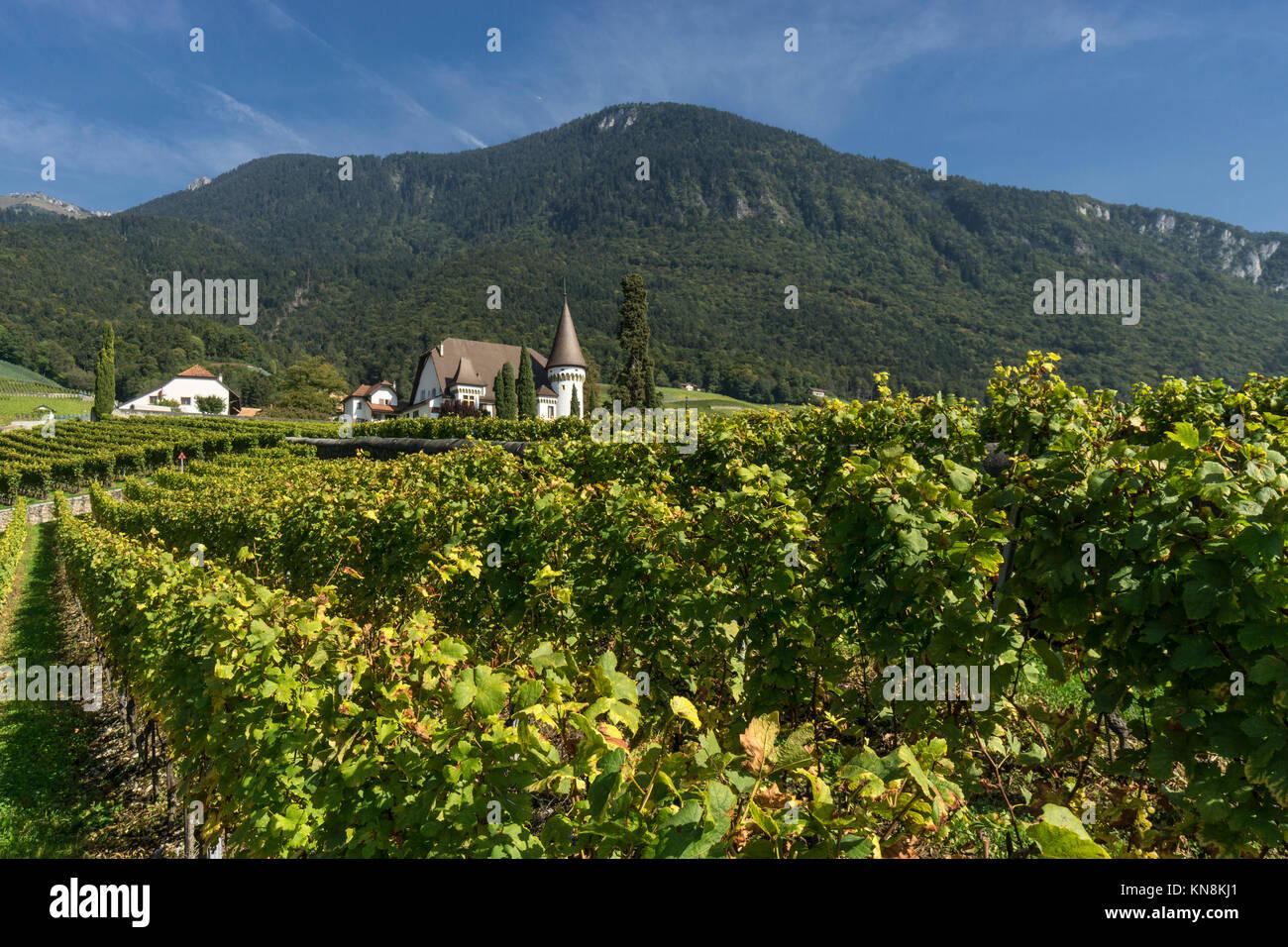 Chateau Maison Blanche, Vineyards , Yvorne,  Lavaux region, Lake Geneva, Swiss Alps,  Switzerland - Stock Image