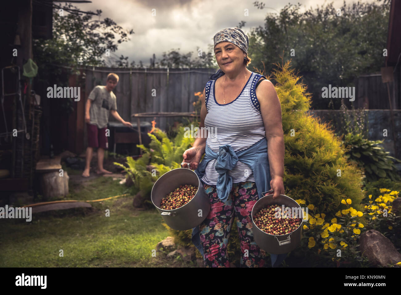 Cheerful senior women farmer in garden with crop of ripe strawberries during summer harvesting season in countryside - Stock Image