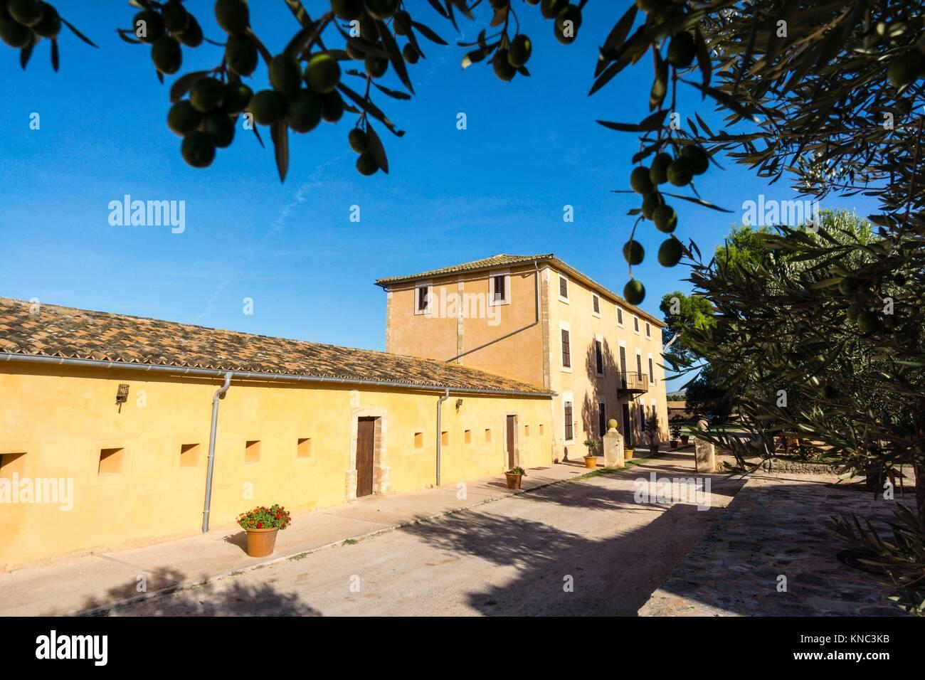 finca publica Son Real, Santa Margarida,Mallorca, Balearic Islands, Spain - Stock Image