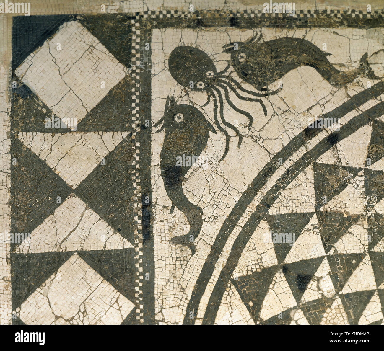 Roman mosaic of marine scenes. Fish and octopus. Black and white. Llado House, From Badalona. 1st-2nd century AD. - Stock Image