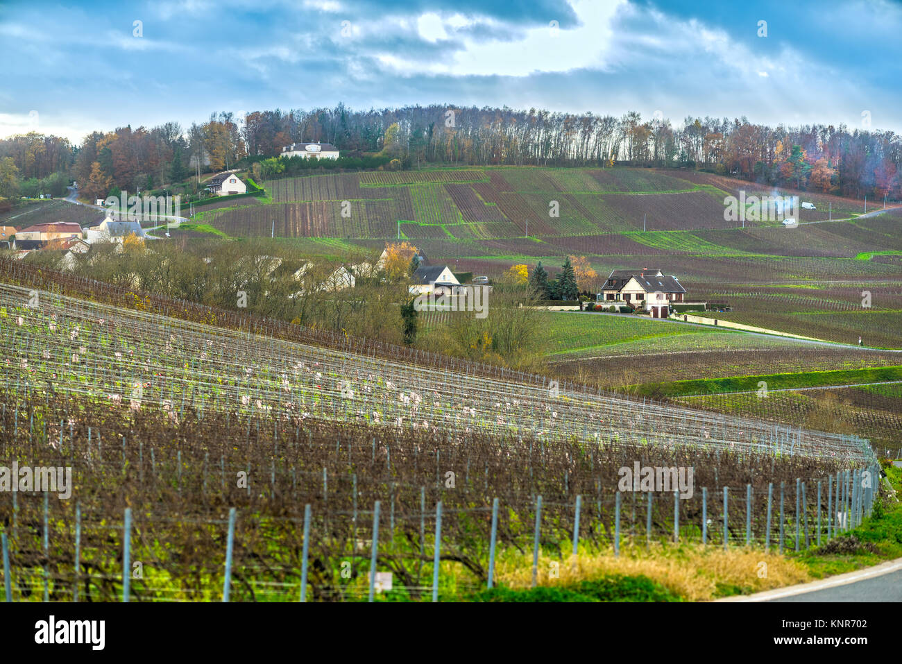 Champagne region france stock photos champagne region for Champagne region in france