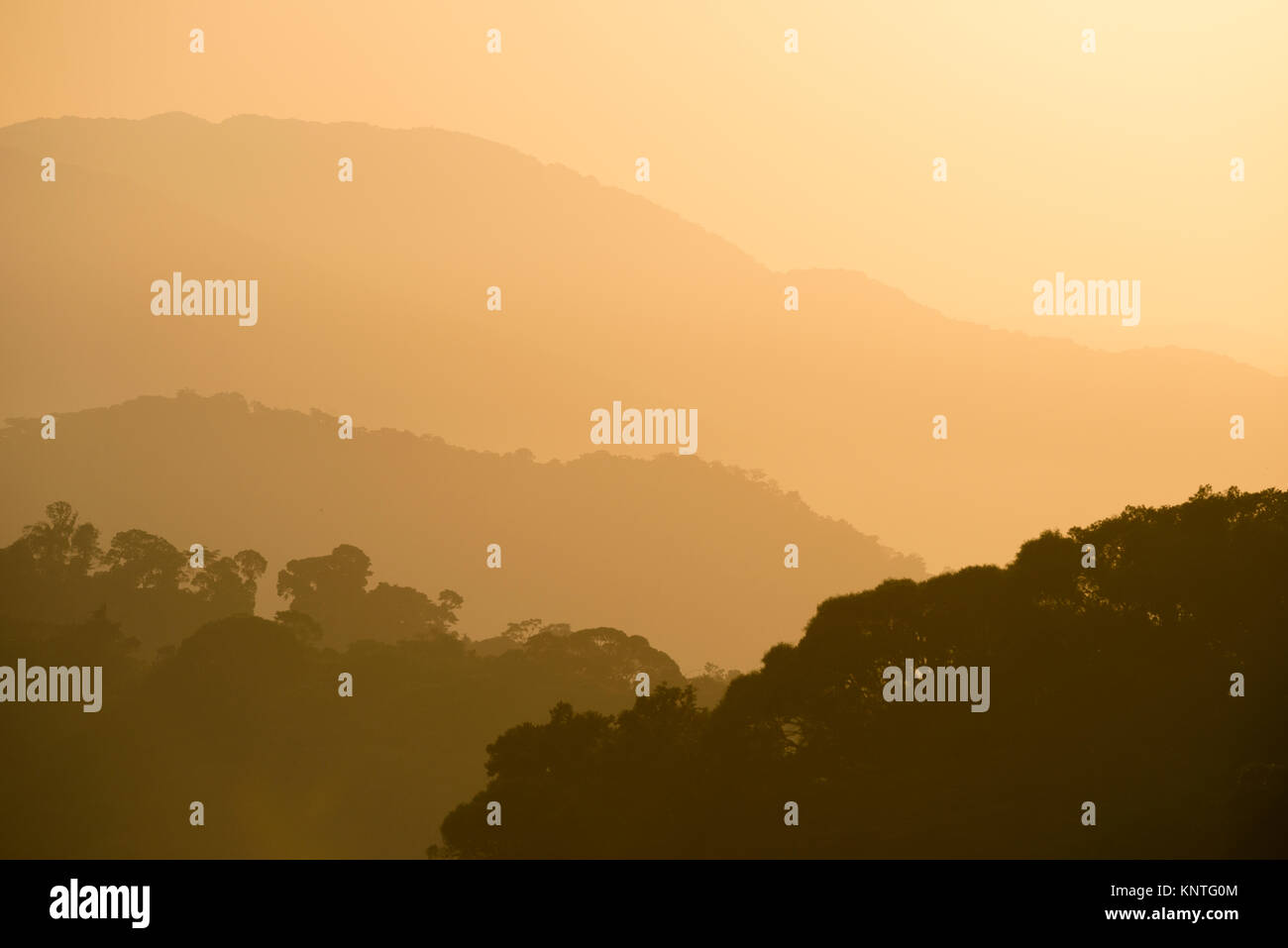 Atlantic Rainforest mountains at Serra de Paranapiacaba, SE Brazil - Stock Image